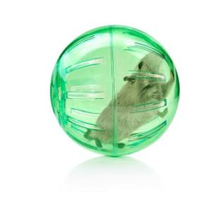 155185-362x331-small-pet-in-an-exercise-ball